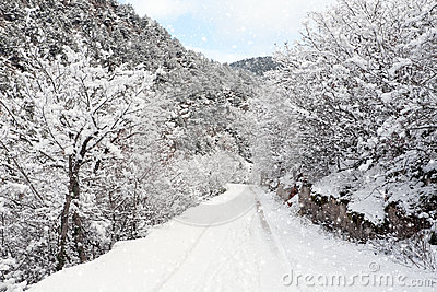 Winter snowy road