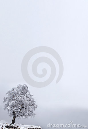 Winter Solitude tree