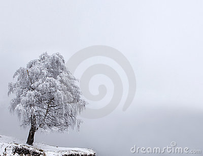 Winter Solitude Tree Royalty Free Stock Photo - Image: 13496195