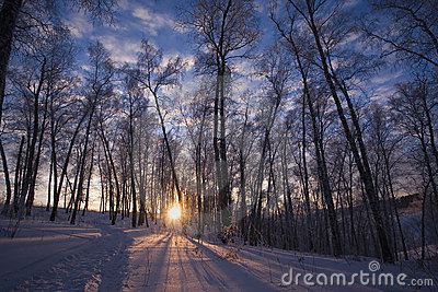 Winter sun in Siberia