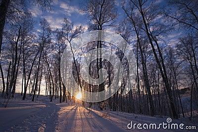 Winter sun in Siberia