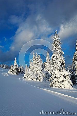 Free Winter Sunset Royalty Free Stock Photo - 2221655