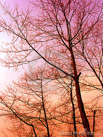 Free Winter Sunset Of The Woods Royalty Free Stock Images - 6140249