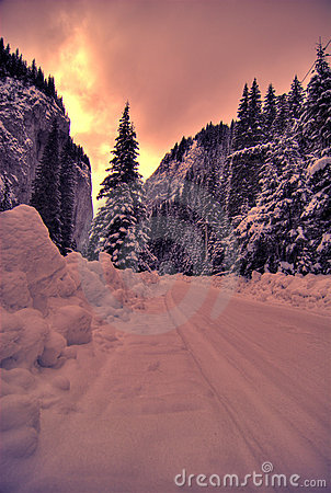 Free Winter Sunset Over Forest Royalty Free Stock Photography - 4049457