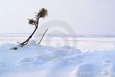 Winter: survive