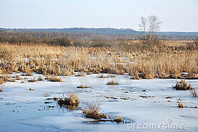 Winter swamp