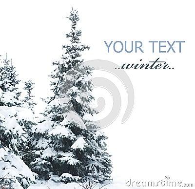 Free Winter Tree Stock Photography - 12249212