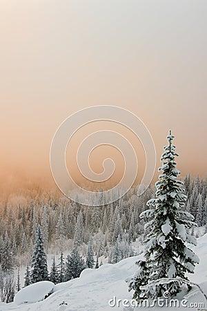 Free Winter Tree Stock Photo - 37430140