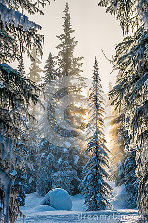 Free Winter Tree Royalty Free Stock Image - 58273706