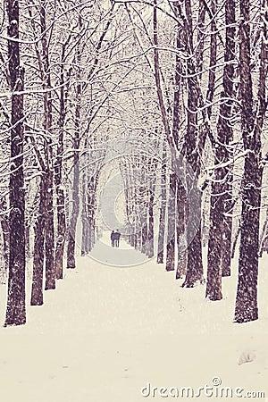 Winter tree alley