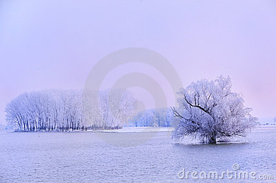 Winter tree covered with frost