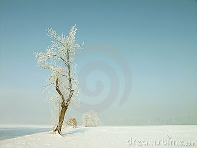 Winter tree, frost covered branches