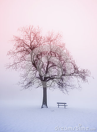 Free Winter Tree In Fog At Sunrise Stock Image - 29381401