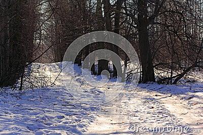 Winter Tree Lined Lane