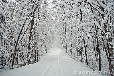 Winter Tree Lined Road with Snow