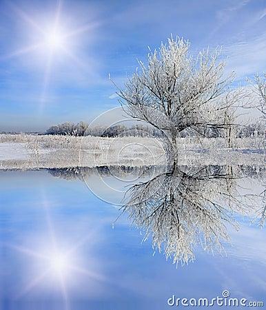 Free Winter Tree Near Frozen Lake Stock Images - 9814084