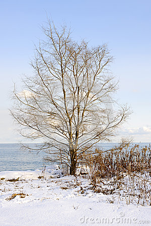 Winter tree on shore