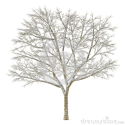 Winter tree on snow isolated