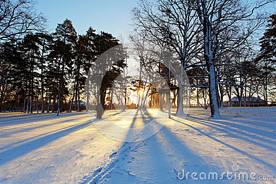 Winter tree with sun rays
