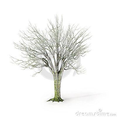 Winter tree on white