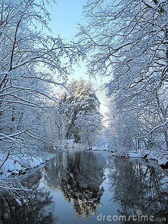 Free Winter Trees Stock Photography - 17442192