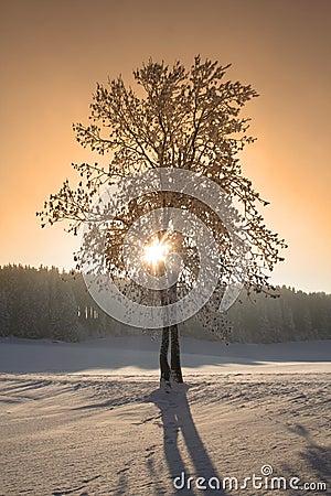 Free Winter Trees Royalty Free Stock Image - 7695696