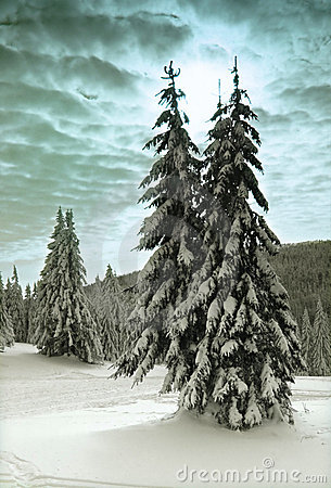 Free Winter Trees Stock Photography - 857382