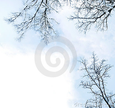 Winter trees frame