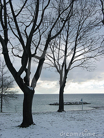 Winter trees on lakeshore