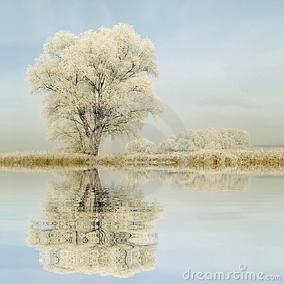 Free Winter Trees On The Field Stock Photos - 12205493