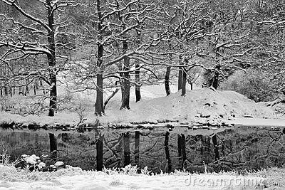 Winter trees with reflections