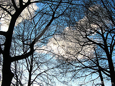 Winter trees and sky