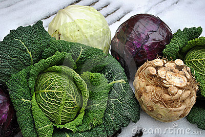 Winter vegetables on snow