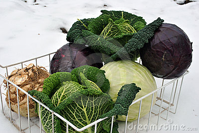 Winter Vegetables On Snow Stock Photography - Image: 17579292