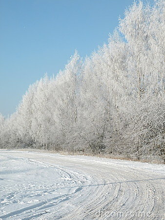 Winter way and tree