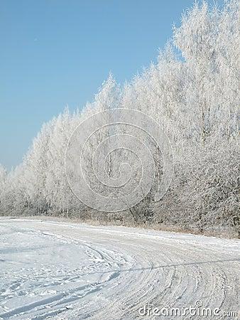 Winter way and tree