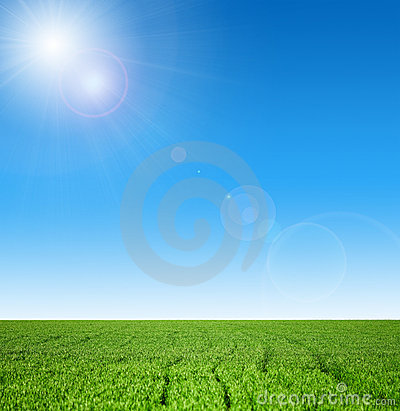 Free Winter Wheat Royalty Free Stock Images - 13978209