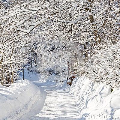 Free Winter Wonderland Royalty Free Stock Photography - 19962167
