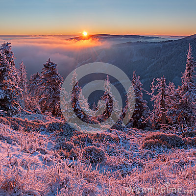 Free Winter Wonderland Stock Images - 28706484