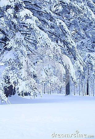 Free Winter Wonderland Royalty Free Stock Images - 3377289
