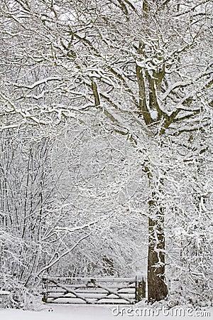 Free Winter Wonderland Royalty Free Stock Photos - 6251148