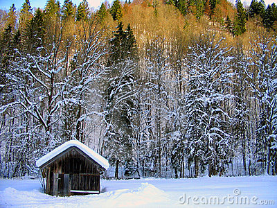 Winter Wonderland Landscape