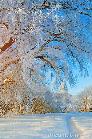 Free Winter Wonderland Scene With Snowy Forest Nature - Forest Landscape Scene With Soft Sunlight Royalty Free Stock Photo - 82011735