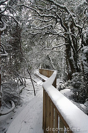 Winter Wonderland Walkway