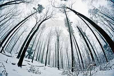 Winter wood