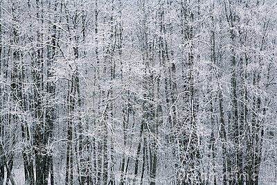Winter by the woods 2