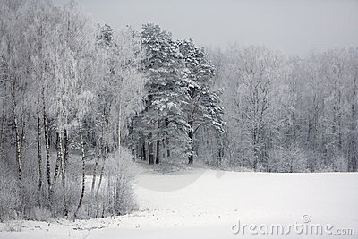 Winter by the woods
