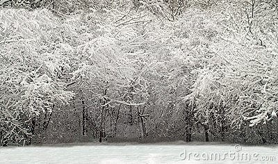 Winter woods scene