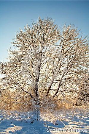 Wintering in Maple