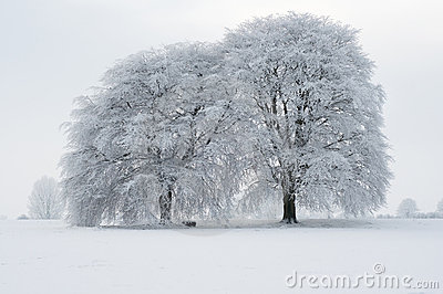 Winterscape Stock Photos - Image: 19099003